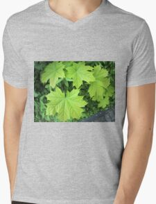 Leaves of a young maple tree on the background of a bush Mens V-Neck T-Shirt