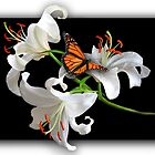 Three White Liliums with Butterfly by Kath Gillies