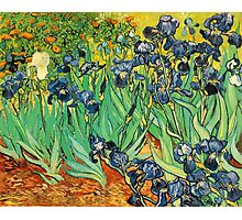 Irises, Vincent van Gogh Photographic Print