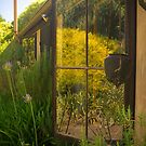 Reflections in the back window at Lavender Fields by Elana Bailey