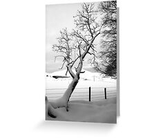A Leaning Tree Greeting Card