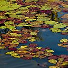 Water lillies in a billabong, Kakadu National Park, Northern Territory.  by Bill  Russo
