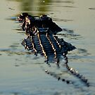 Crocodile swims away, Kakadu National Park, Northern Territory.  by Bill  Russo