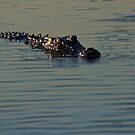 Crocodile swims bya, Kakadu National Park, Northern Territory.  by Bill  Russo