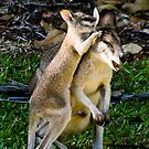 Kangaroo Joey tells a secret by Bill  Russo
