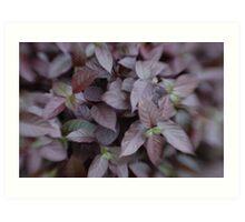 Purple Leaves Art Print
