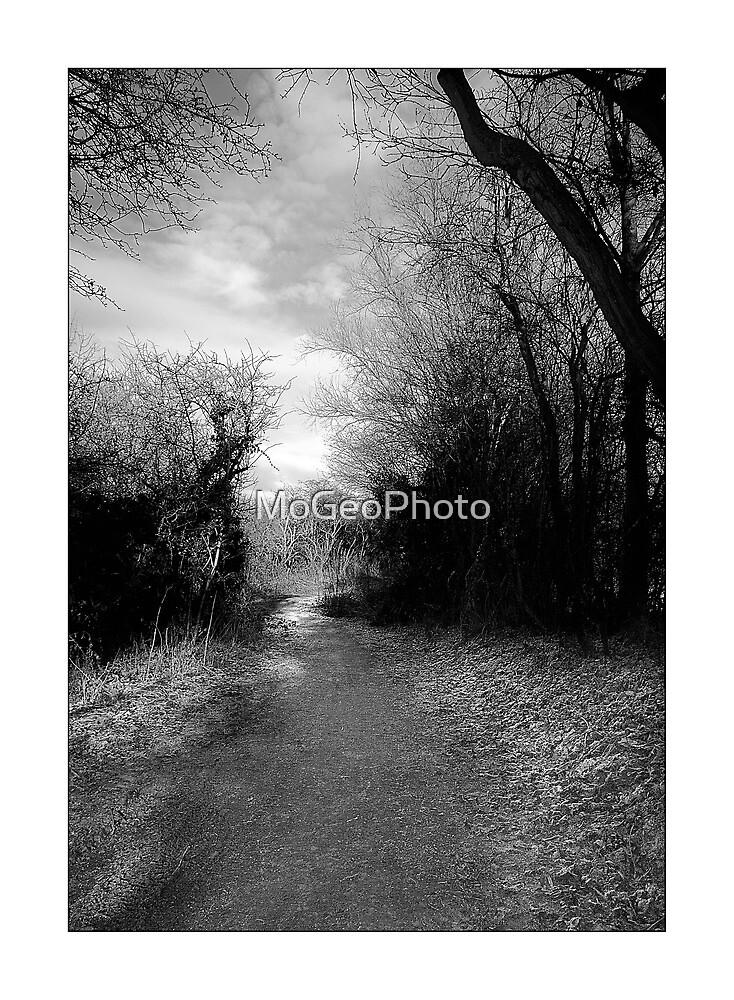 Purwell Woods - Hitchin, Hertfordshire by MoGeoPhoto