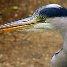 Grey Heron by Segalili