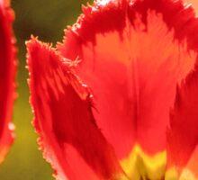Glowing Red Tulips Sticker