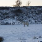 snow horse by molly makeout<3