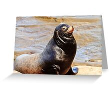 Sea Lion Sunning Greeting Card