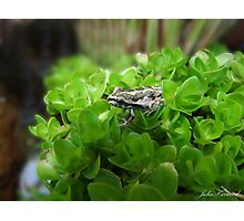 Froggie Photographic Print