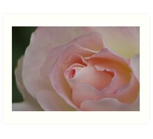 rose Art Print