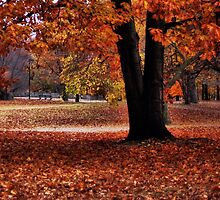 Wonderful fall by LudaNayvelt
