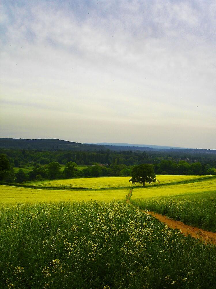 Oilseed Rape Landscape by clivester