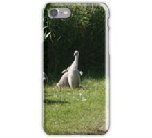 Swans with cygnets iPhone Case/Skin