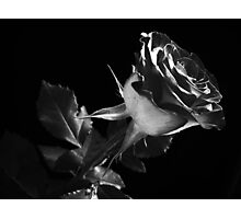 One Lovely  Rose. Photographic Print
