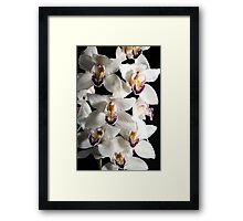 White Orchid Spray Framed Print