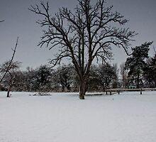 Lone Tree by Edward Bentley