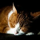 Sleeping Cat by Patrick Bongers