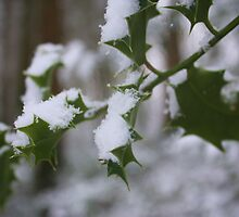 Snowy Holly by Anna Leworthy