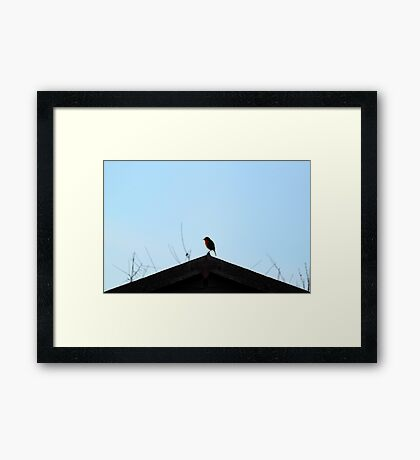 Perched Robin Framed Print