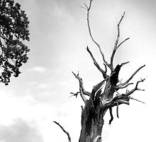 Old Dead Tree in Monochrome by johnny2sheds