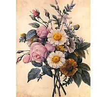 vintage botanical art, beautiful yellow daisy and pink rose flowers. Photographic Print