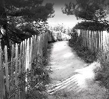 Path to the Beach by johnny2sheds