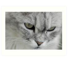 Shadow cat 3 Art Print