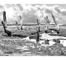 Dead Tree Trunks in the Salt Marshes Photographic Print