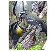 Fighting Bananaquits Poster