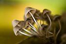 Magic mushrooms by Vikram Franklin