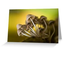 Magic mushrooms Greeting Card