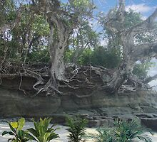 1516-XL-Old Florida Beach Roots by George W Banks