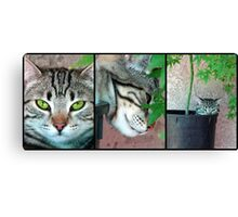 Growing Kittens Canvas Print