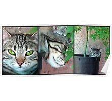 Growing Kittens Poster