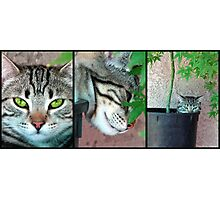 Growing Kittens Photographic Print