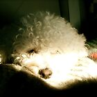 Sleepy Puppy in the Sunlight by BeccaAlysse