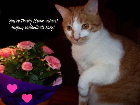 You're Truely Meow-velous ~ Happy Valentine's Day! by Marie Sharp