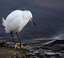 fishin for shrimp by kathy s gillentine