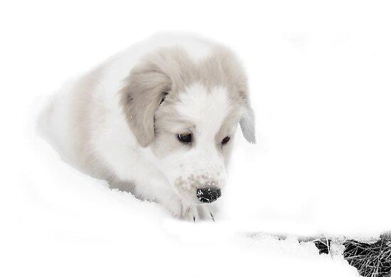 Bonzo the Snow Rescue Puppy by Ritva Ikonen