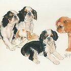 English Toy Spaniel Puppies by BarbBarcikKeith
