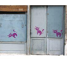 PinkCats Photographic Print
