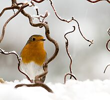 Let it snow! by Jacky Parker
