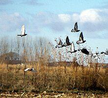 Pigeons Take Flight by Jan  Tribe