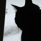 Snow Cat by JillyPixie