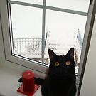 Window by JillyPixie