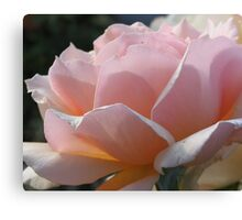 Simple and Delicate Pink Petals Canvas Print