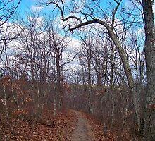 Late Autumn Woodland by Dandelion Dilluvio